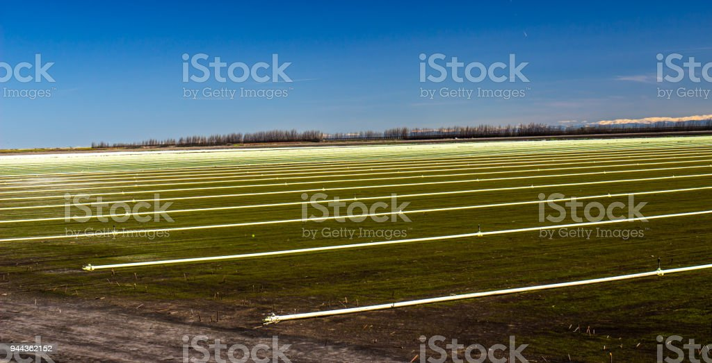 Rows Of Irrigation Sprinklers & Pipes stock photo