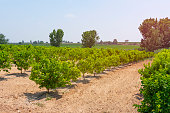 Antalya, Agricultural Field, Landscape - Scenery, Orange Tree, Rural Scene