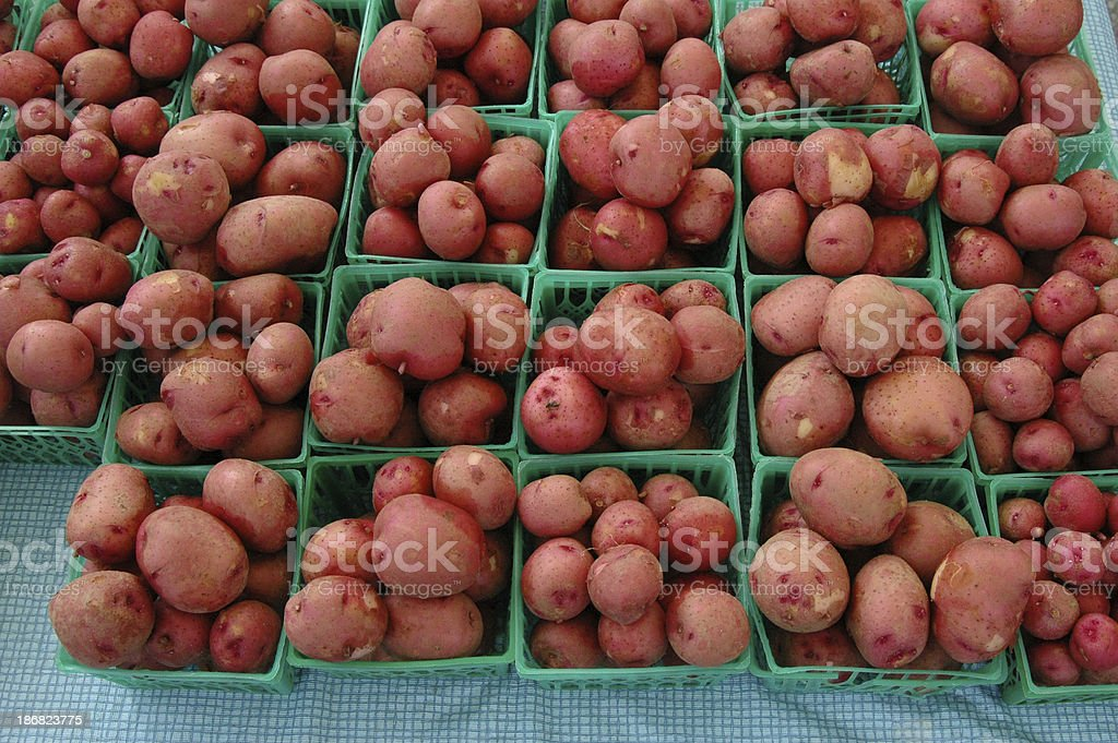 Rows of Red Potatoes royalty-free stock photo