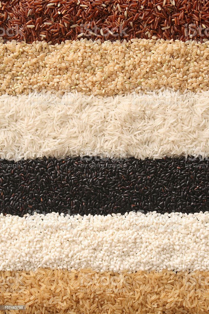 Rows of rice stock photo