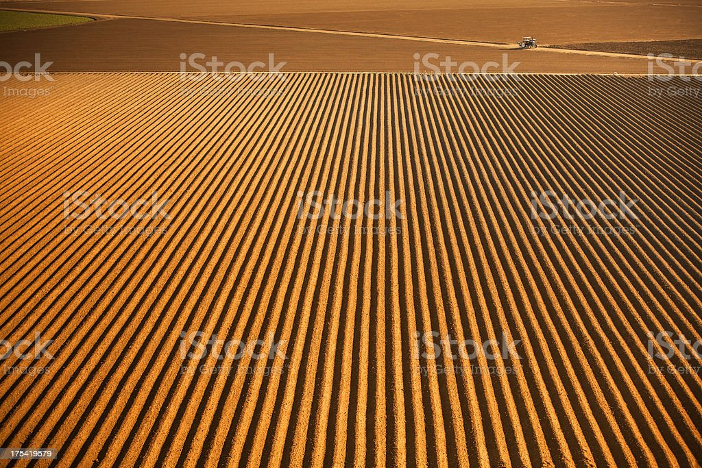 Rows of seed on fertile farm land royalty-free stock photo