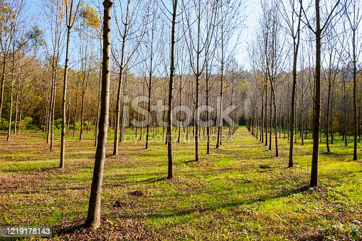 Young trees planted to repopulate the forest
