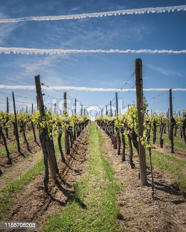 925850210istockphoto Rows of vineyards in Alsace with a beautiful blue sky 1155705203
