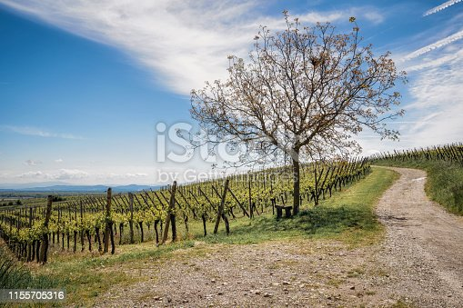 925850210 istock photo Rows of vineyards in Alsace with a beautiful blue sky 1155705316