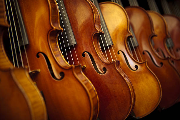 Rows of violins  string instrument stock pictures, royalty-free photos & images