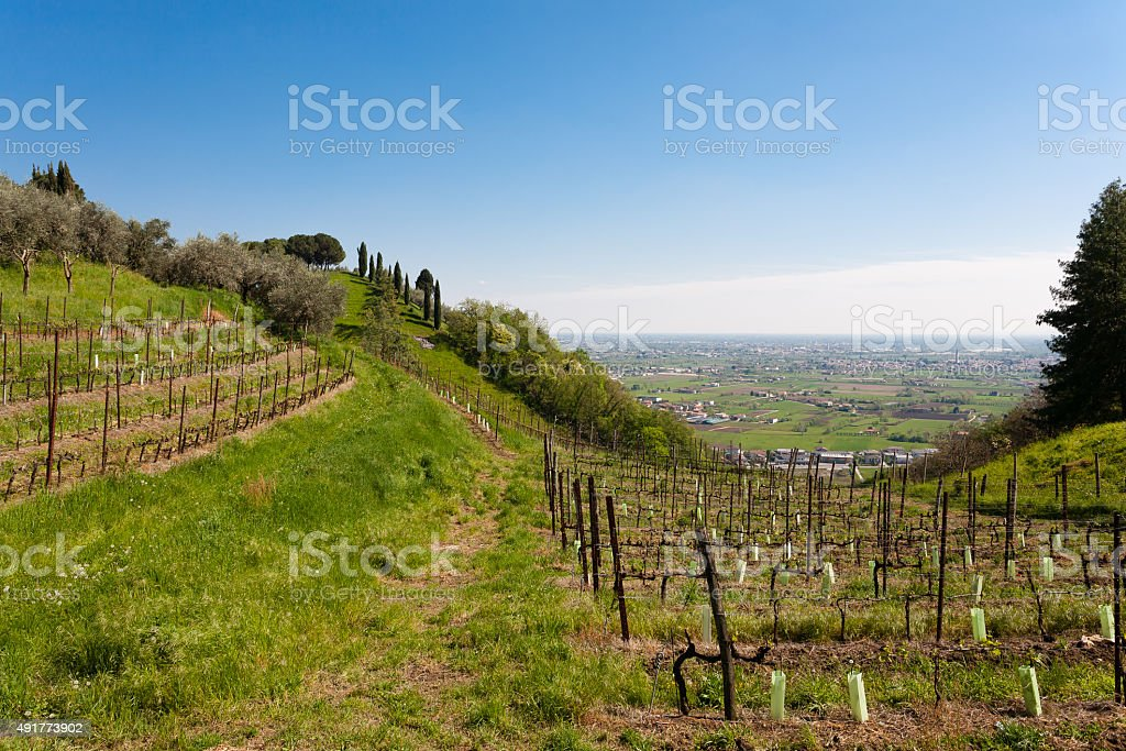 File di vino - foto stock