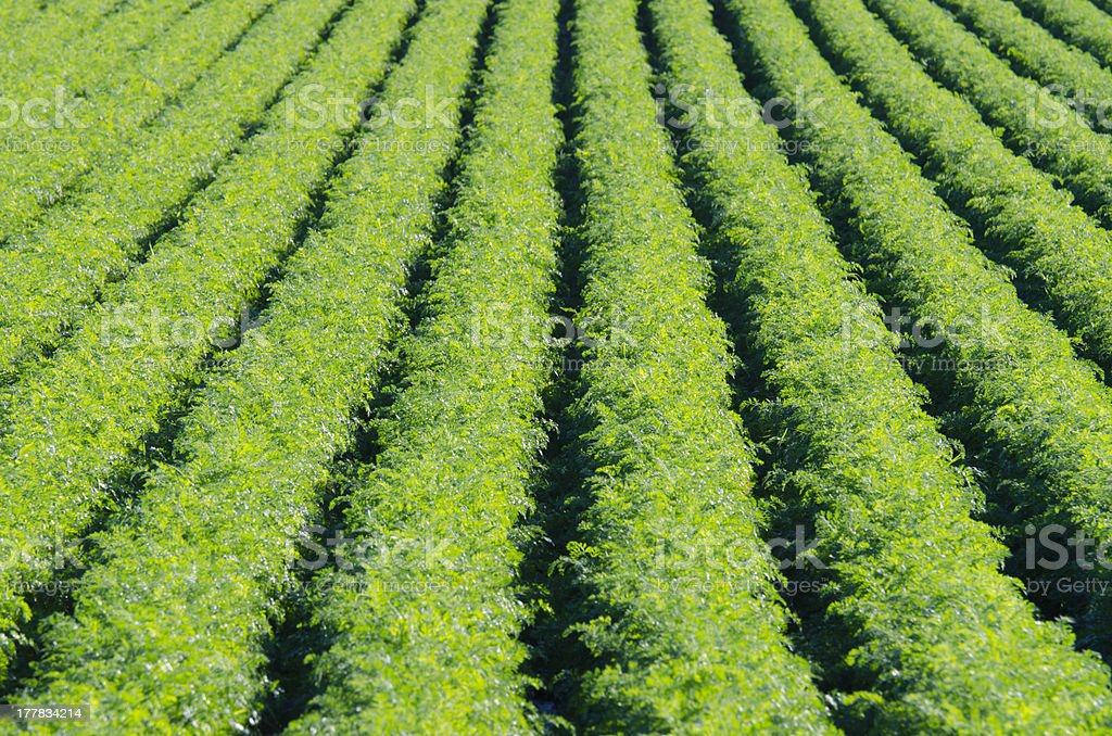 Rows on green plant royalty-free stock photo