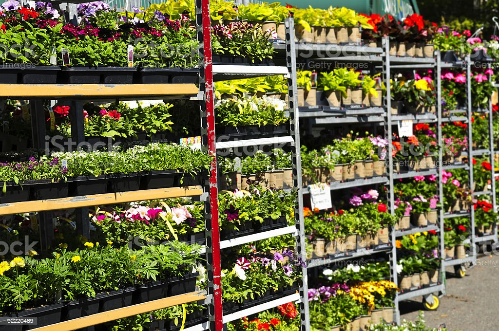 Rows over shelving full of plants and flowers for sale stock photo