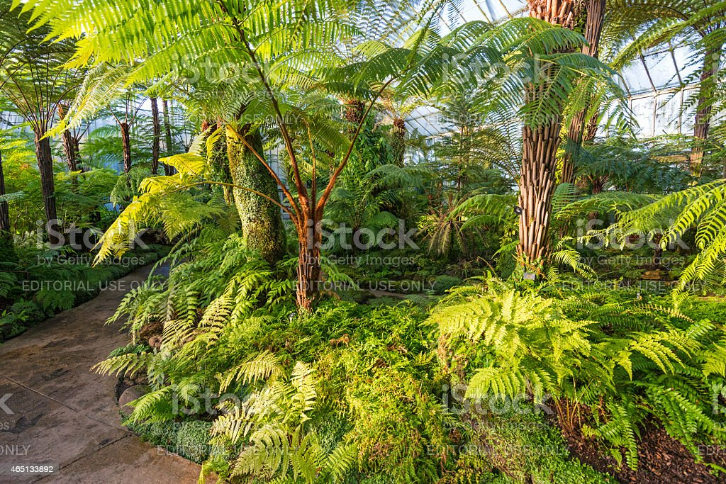Royal Botanic Gardens, Edinburgh, Scotland, UK stock photo