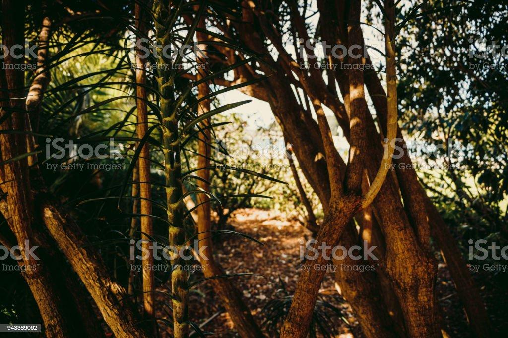 Royal Botanic Gardens Sydney stock photo