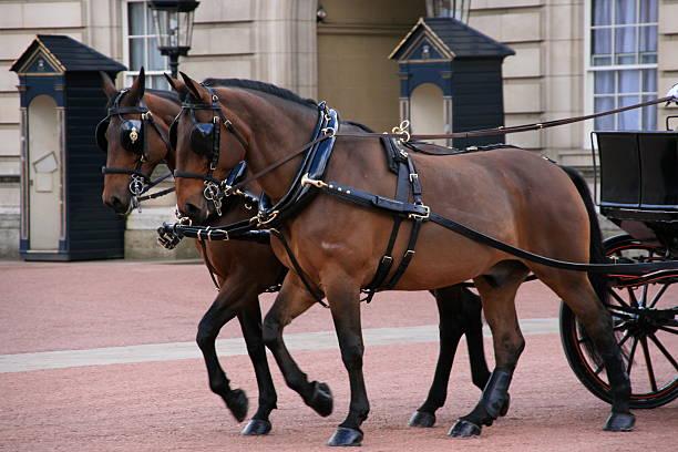royal kutschen und pferde, die buckingham palace - scheuklappe stock-fotos und bilder