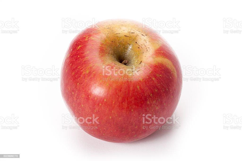 royal gala apple stock photo