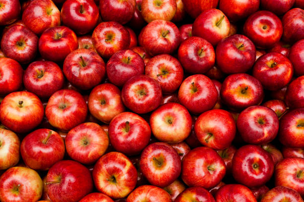 royal gala apples - aluxum stock pictures, royalty-free photos & images