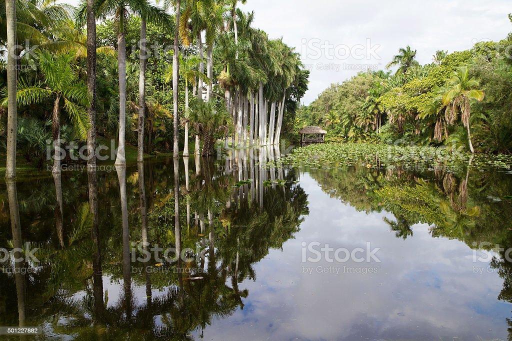 Royal Palm trees reflecting in the Bonnet House slough stok fotoğrafı