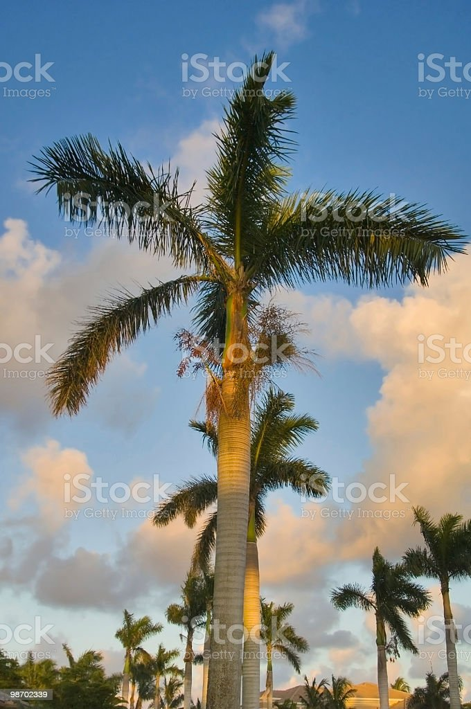 로열 팜스 해질녘 플로리다 royalty-free 스톡 사진