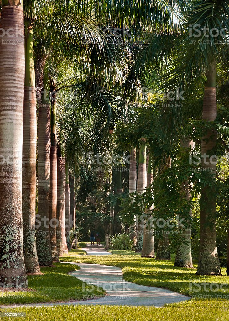 Royal Palms Walkway stock photo