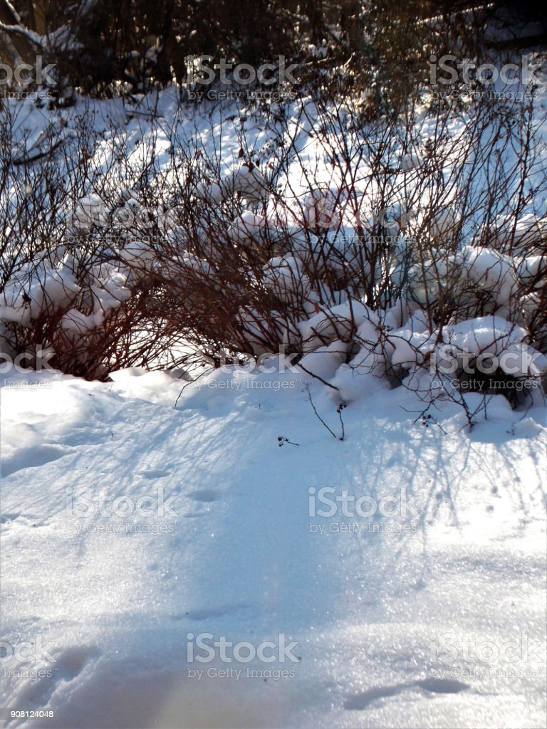 Royalty Free Photograph of a Perfectly Beautiful Clear and Sunny Winter Day with Fresh Fallen Snow covering Shrubbery and Backyard Acreage stock photo