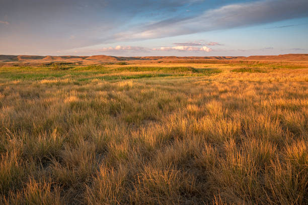 rrenchman river valley at sunrise - great plains stock photos and pictures
