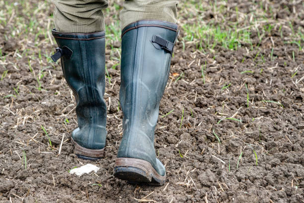 Rubber boots for use in agriculture. stock photo