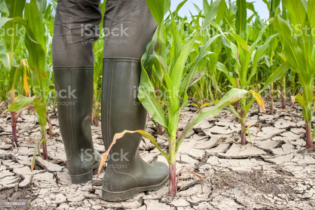 Rubber boots on parched soil. - Royalty-free Accidents and Disasters Stock Photo