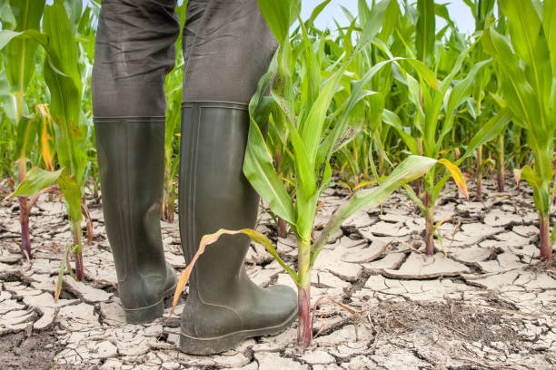 Rubber boots on parched soil. stock photo