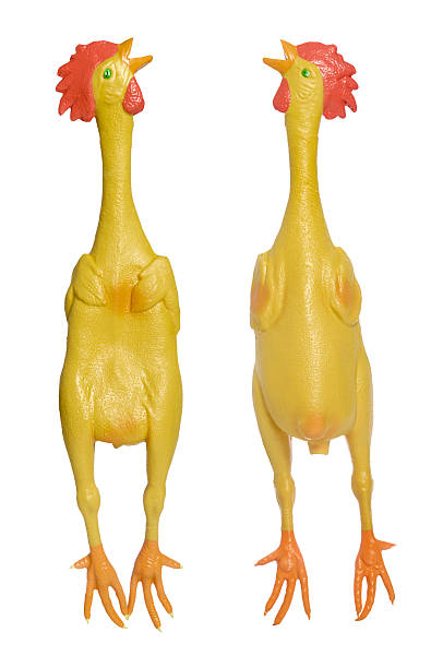 Royalty Free Rubber Chicken Pictures Images And Stock