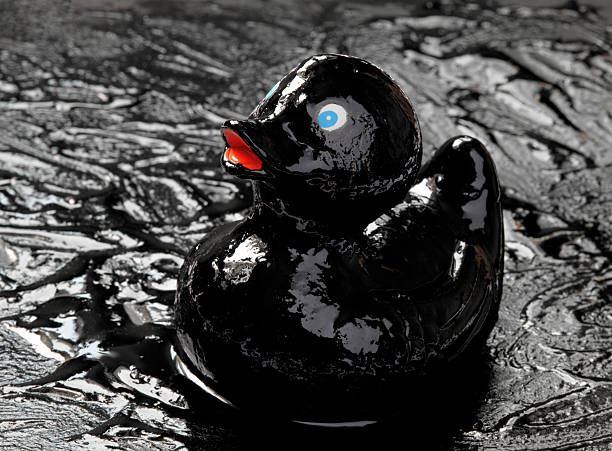 Gummiente in Ölpest – Foto