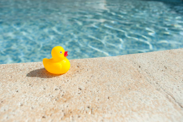 Rubber duck stock photo