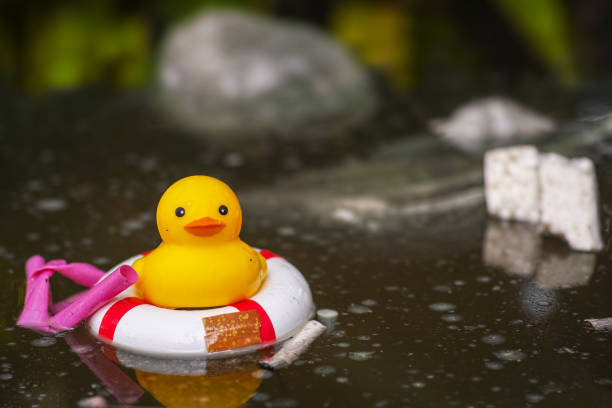 Royalty Free Rubber Duck In An Oil Slick On Water Pictures, Images ...