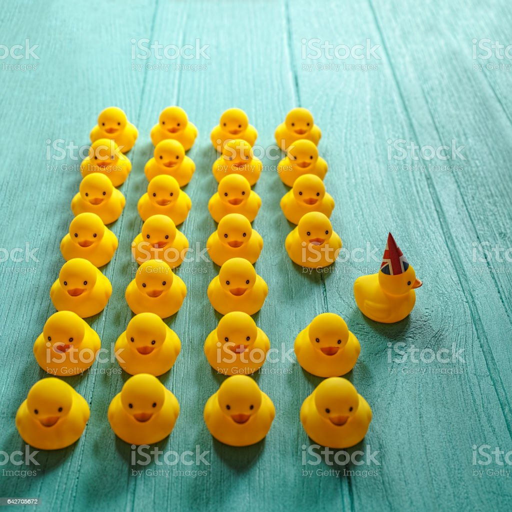 Rubber ducks in a group formation whilst a single duck with a Union Jack hat on breaks away from the group. stock photo