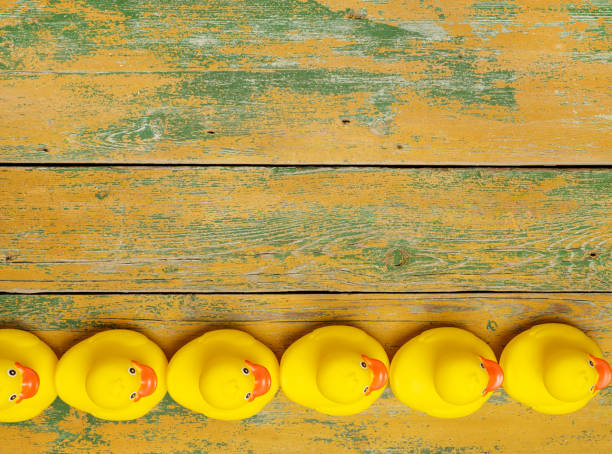 rubber ducks in a row - in a row stock pictures, royalty-free photos & images