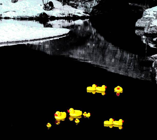 Rubber Ducks in Central Park stock photo