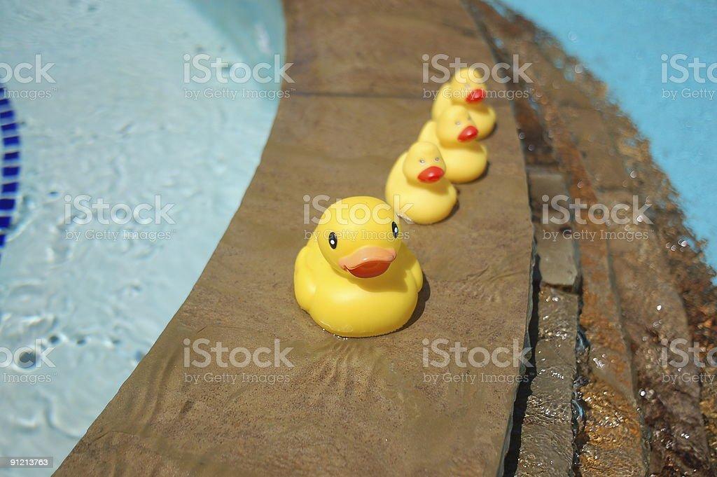 Rubber Ducks royalty-free stock photo