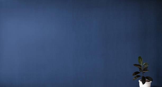 Rubber Feige in einem blauen Zimmer – Foto