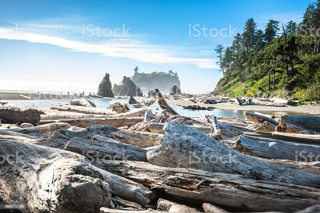 Ruby beach in Washington State stock photo