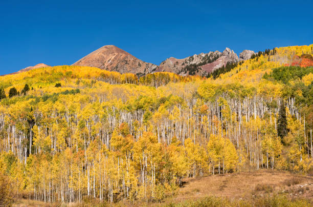 Ruby Peak with Autumn Aspen viewed from Kebler Pass stock photo