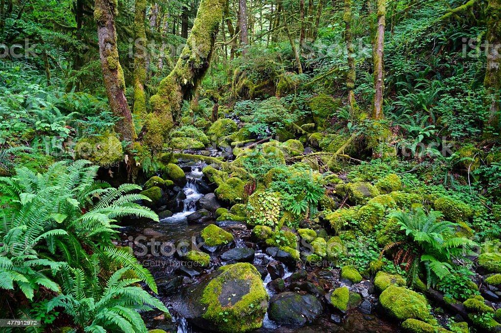 Ruckel Creek Extreme Green stock photo