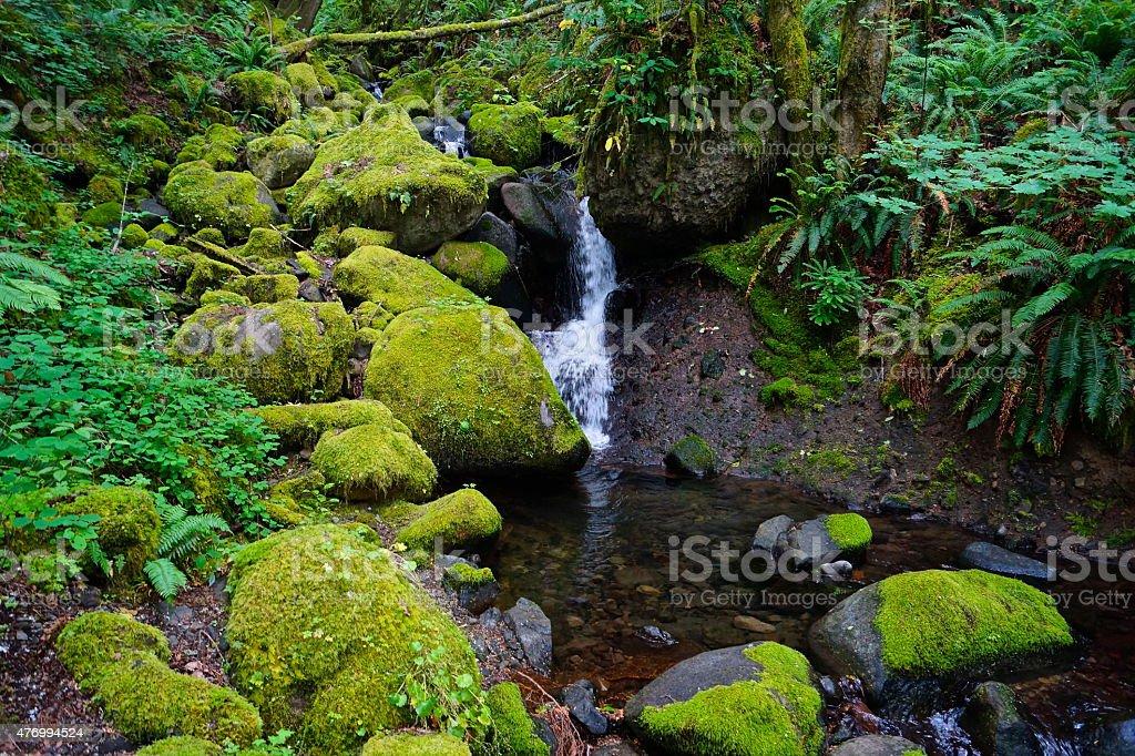 Ruckel Creek Jungle stock photo