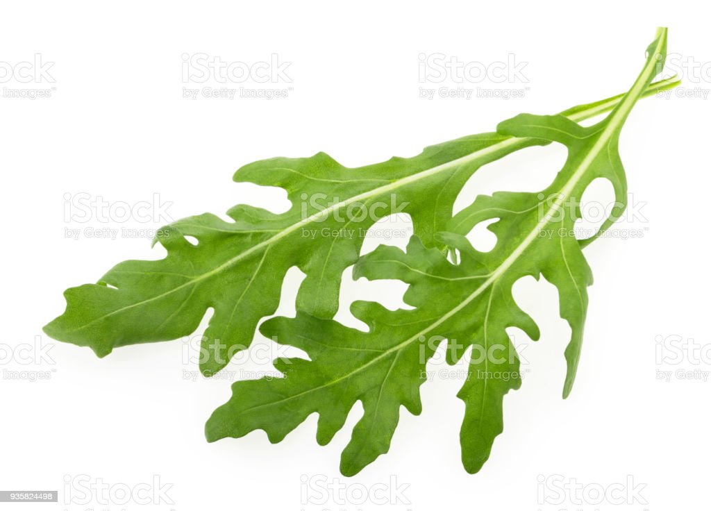 Rucola or arugula leaf isolated on white background stock photo