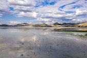 Ruddy shelducks on lake.Taken via drone. Yarisli Lake in Burdur, Turkey.
