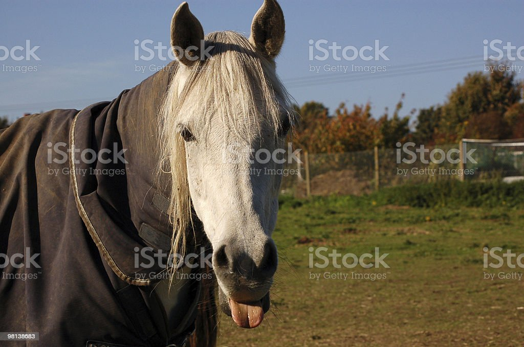 Rude Horse royalty-free stock photo