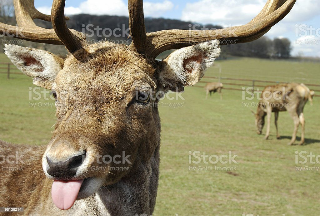 rudeness royalty-free stock photo