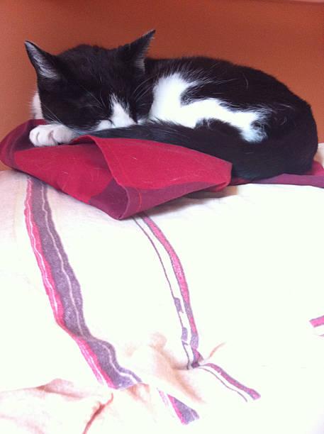 Rudi schläft – Foto