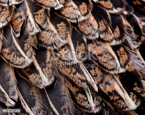 istock Ruffed Grouse Feather Pattern Abstract 682025068