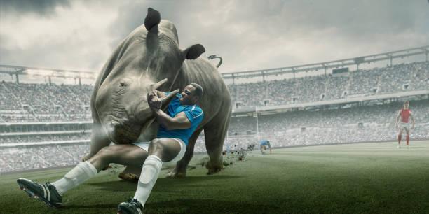 Rugby joueur lutte contre Rhino pendant le Match au stade extérieur - Photo