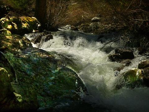 Ruige Centrale Idaho Stockfoto en meer beelden van Boom