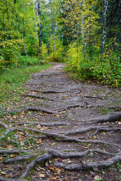 Rugged Hiking Trail at Jay Cooke State Park stock photo