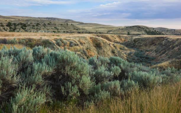 Rugged landscape of the prairie near Billings, Montana, USA. stock photo