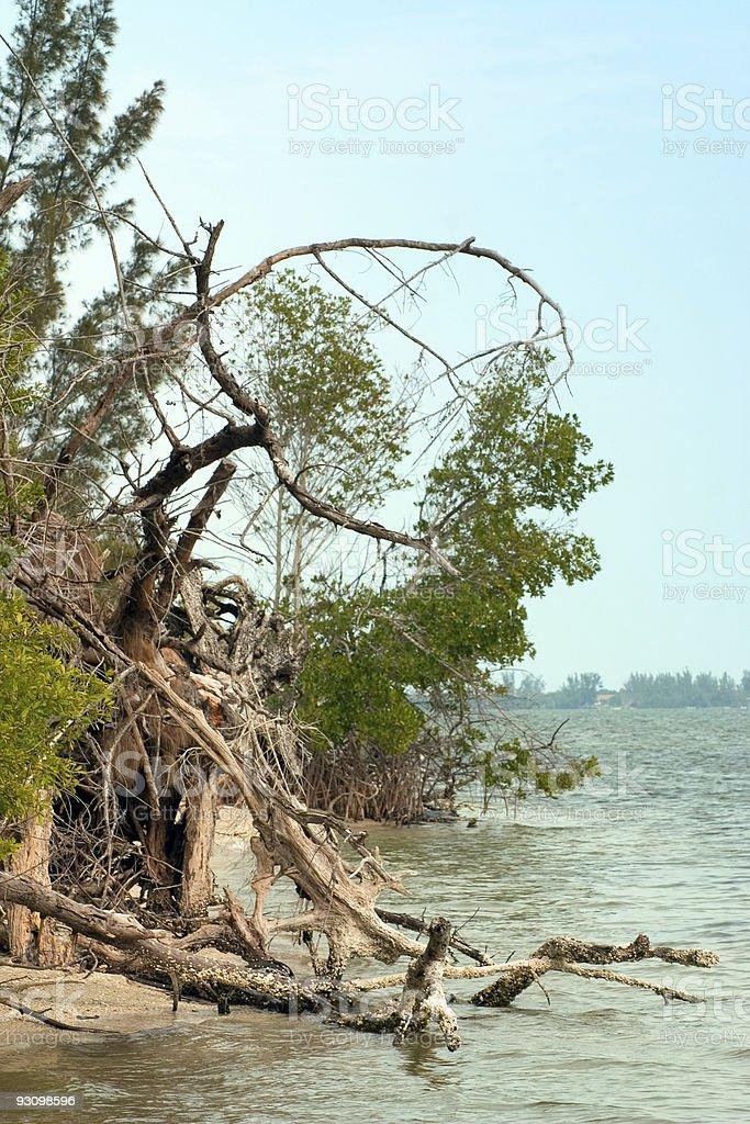 Rugged Shoreline royalty-free stock photo