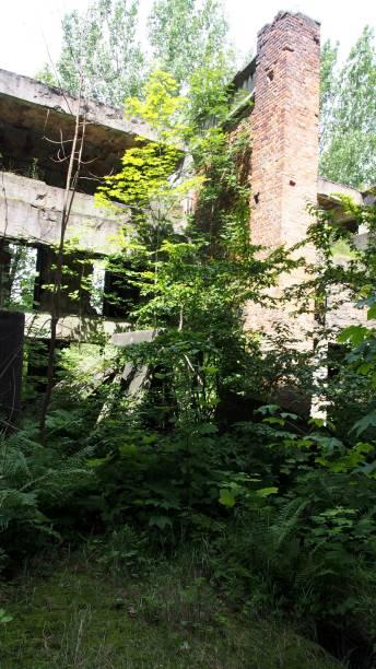 Ruine und Natur Grün in der Trümmerlandschaft ruine stock pictures, royalty-free photos & images